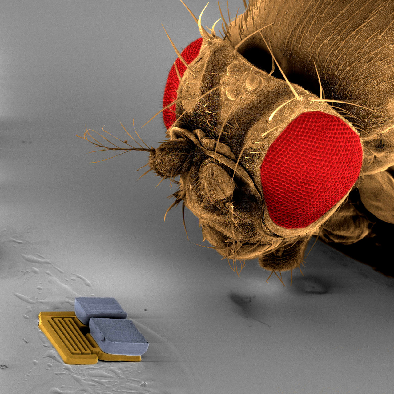 mems-nanotechnologie-nanotechnologies-nano-robocup-nanosoccer_ETH_Zurich